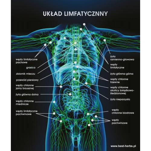 Plakat układ limfatyczy - czarne tło
